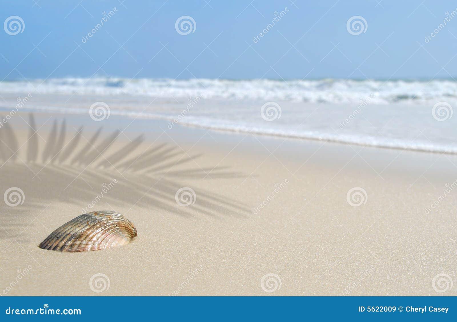 Seashell sur la plage sous la paume