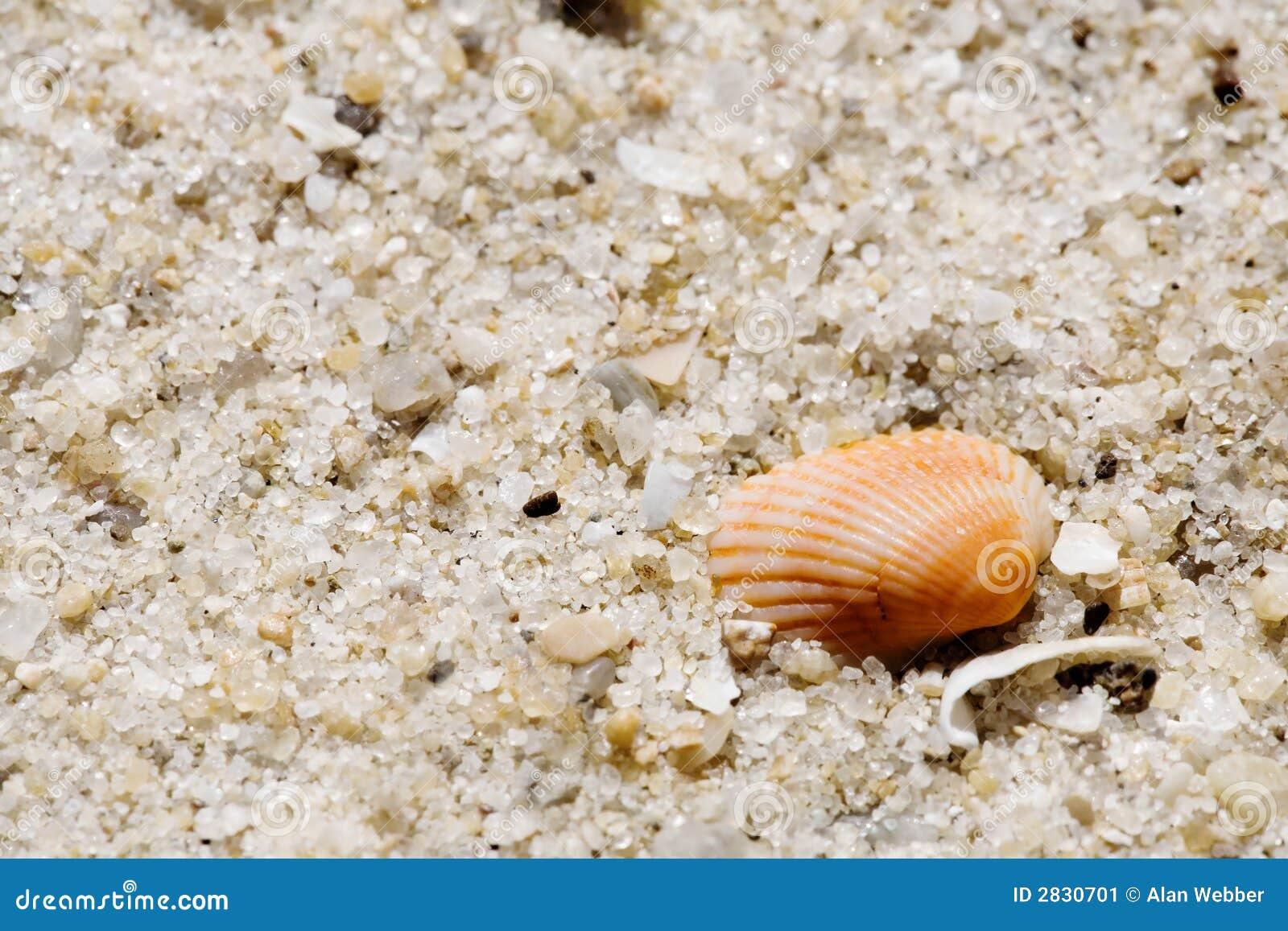 Seashell sur le sable