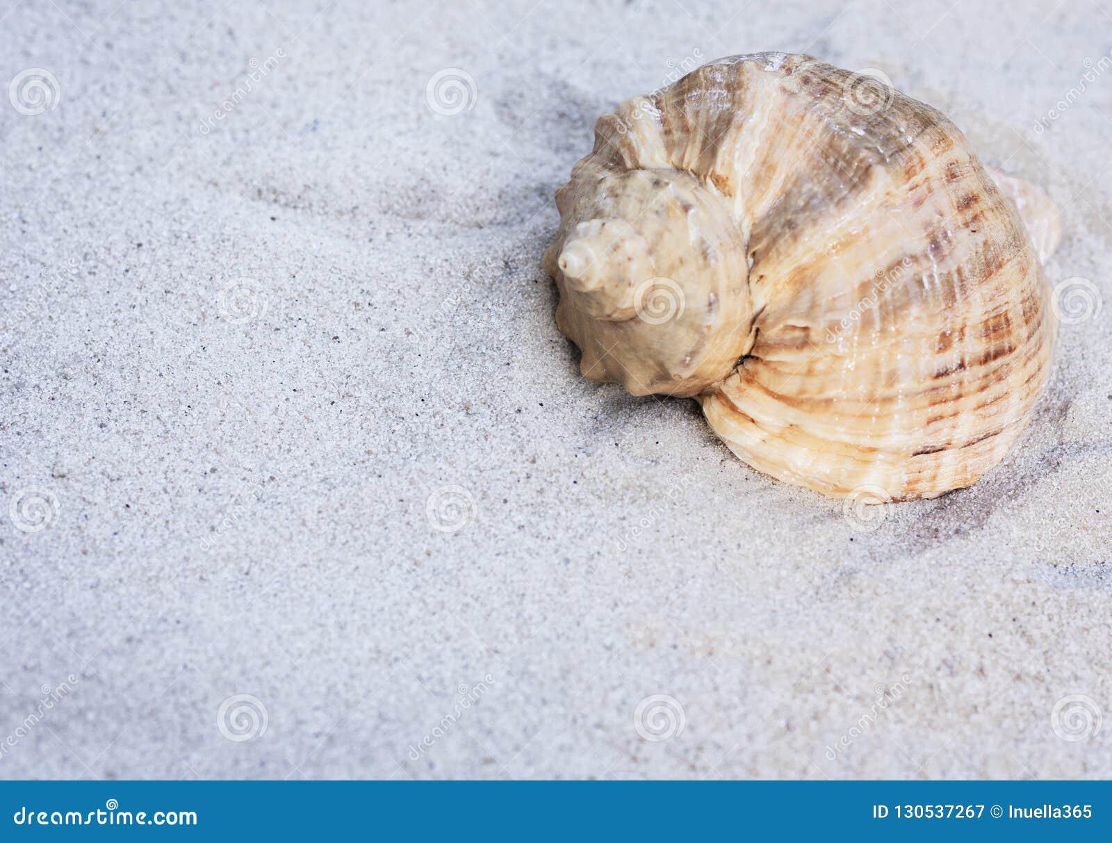 Seashell sur le sable Fond de plage d été en Thaïlande avec l espace de copie pour le texte