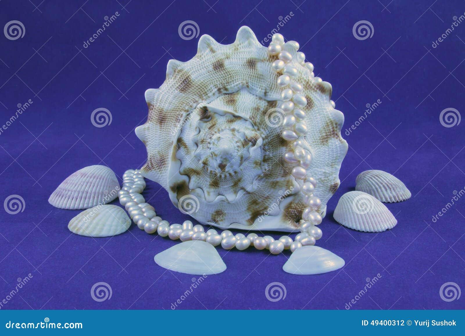 Download Seashell und Perlen stockfoto. Bild von getrennt, ansammlung - 49400312