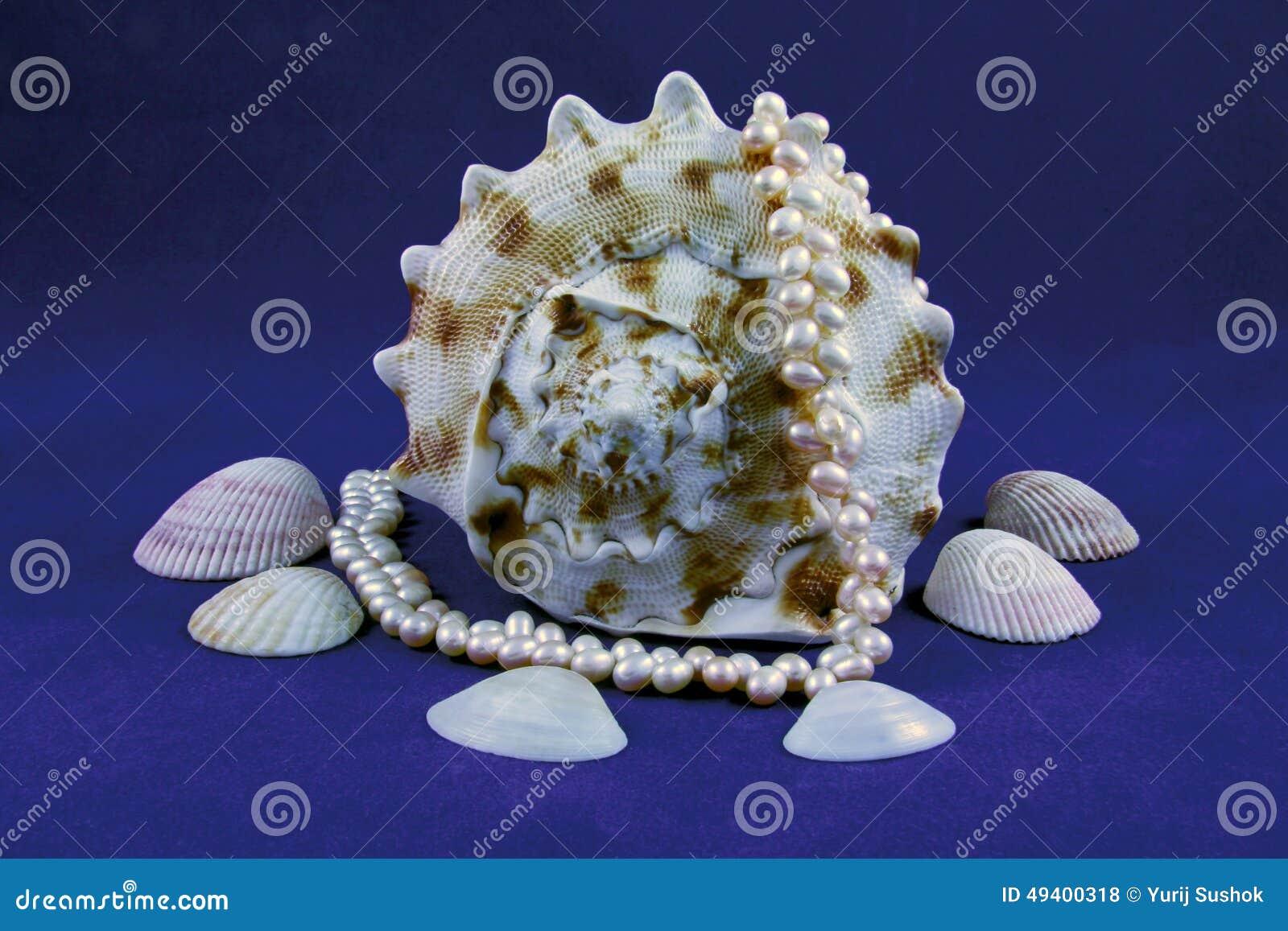 Download Seashell und Perlen stockfoto. Bild von luxus, nahaufnahme - 49400318