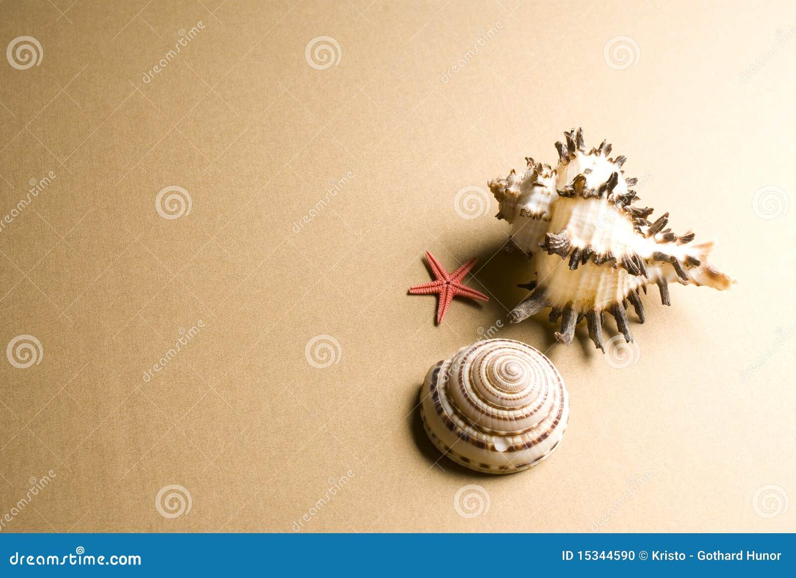 Seashell y estrellas de mar