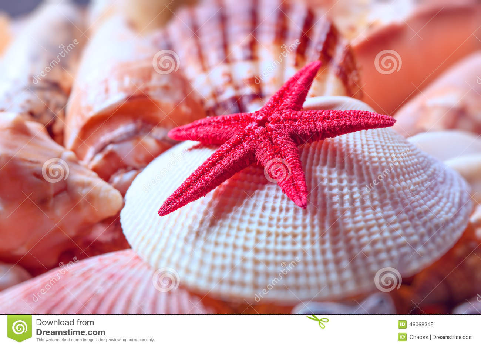 Seashells и морские звёзды