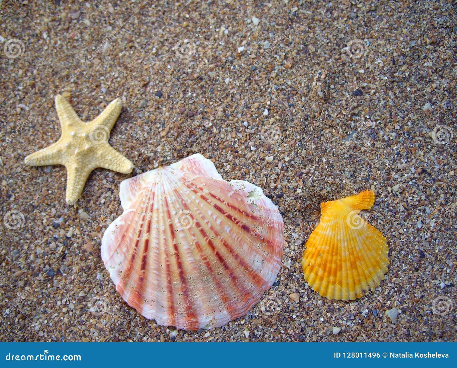 Seashells на песчаном пляже