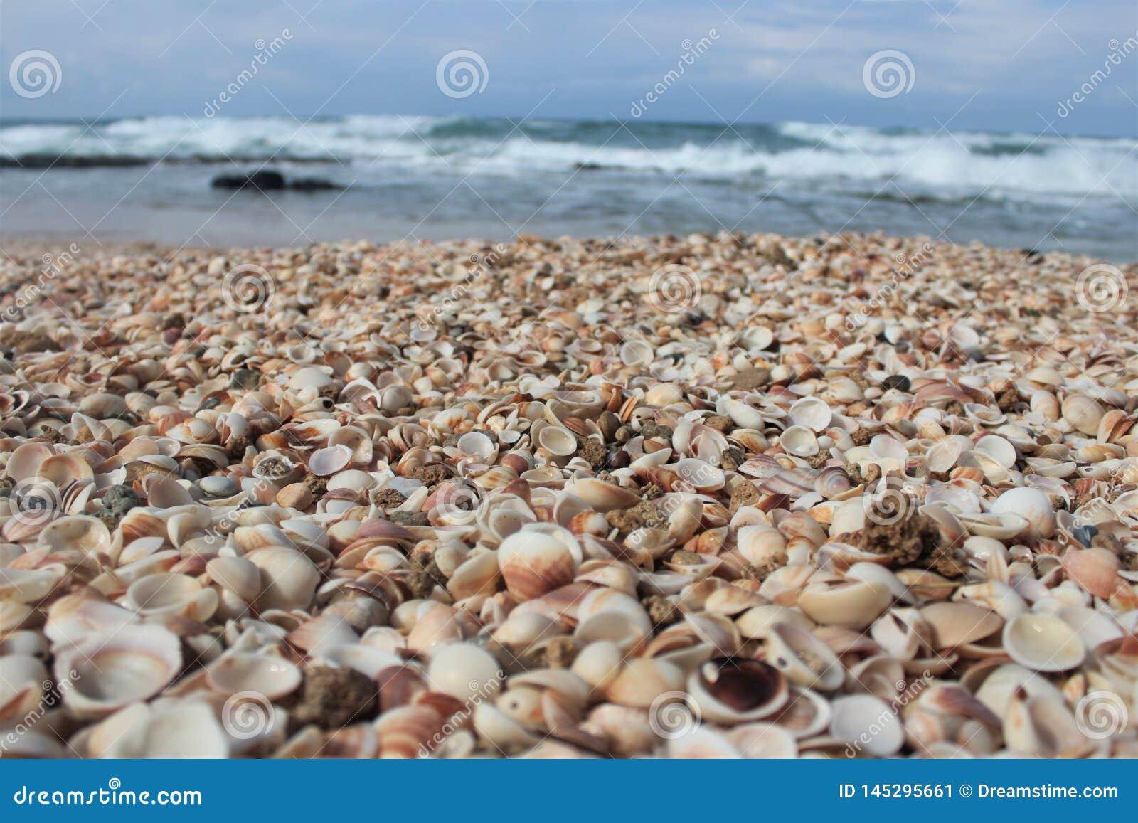 Seashells на пляже
