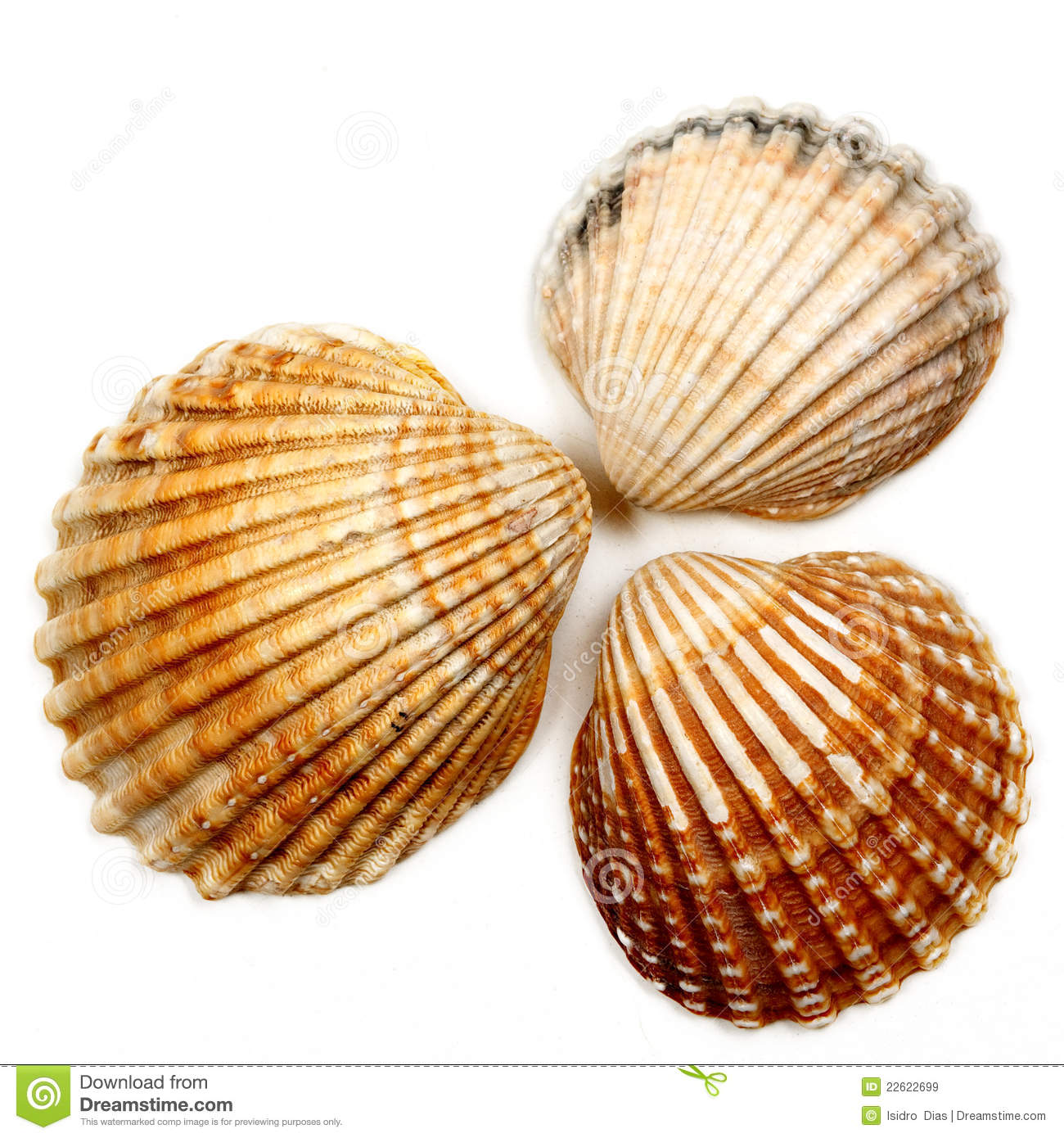 Seashells 04 Royalty Free Stock Images - Image: 22622699