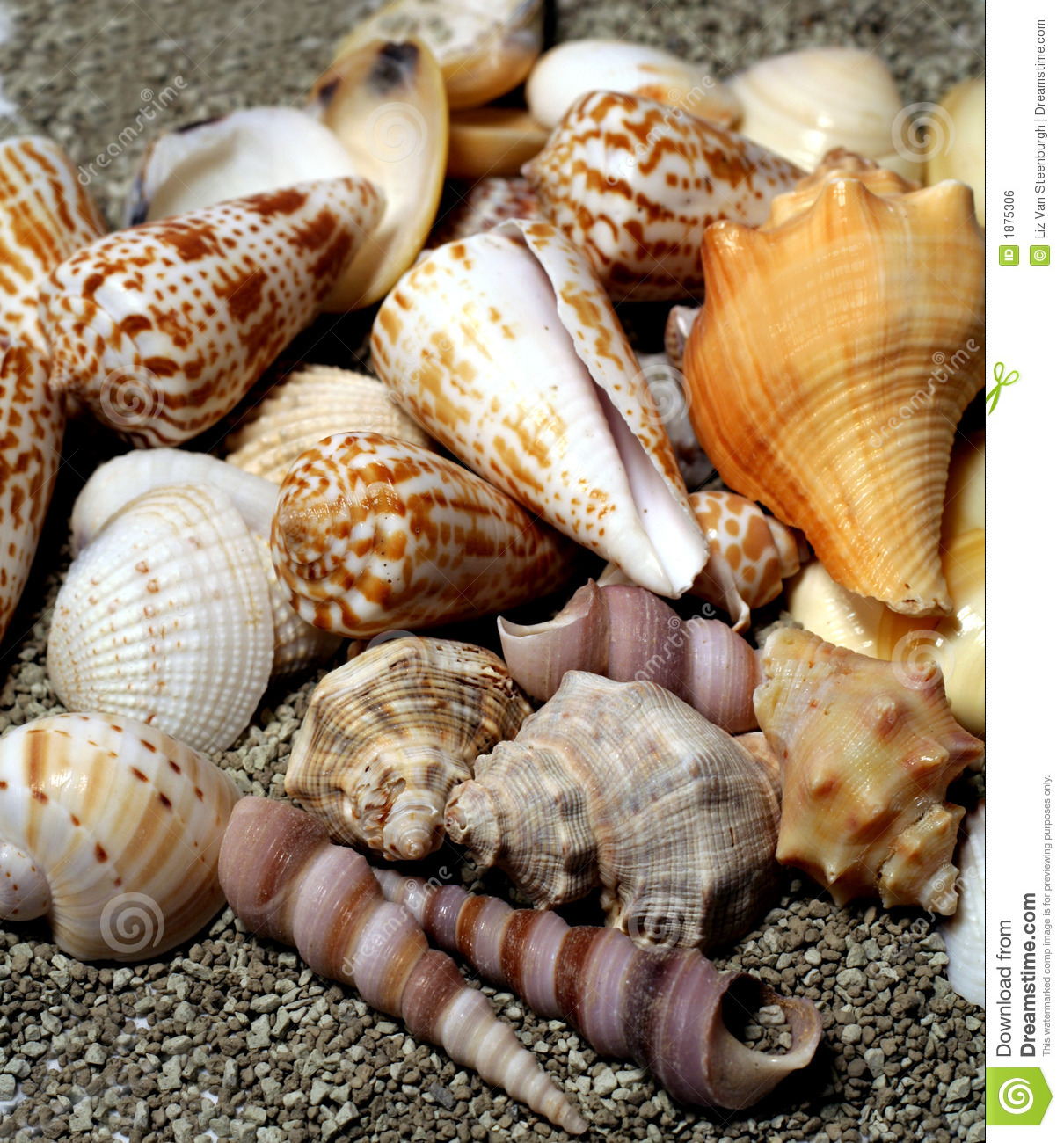 Different shaped seashells on sandy beach background.