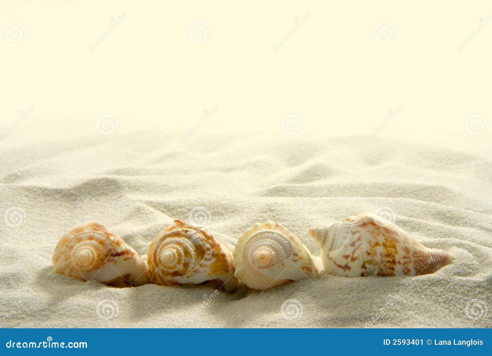 Seashells (2)