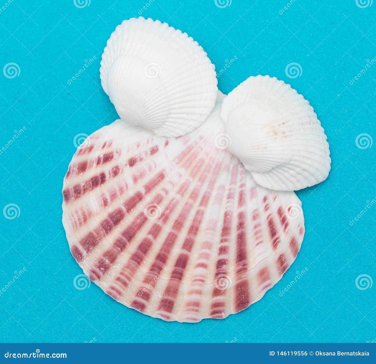 Seashells auf einem blauen Hintergrund