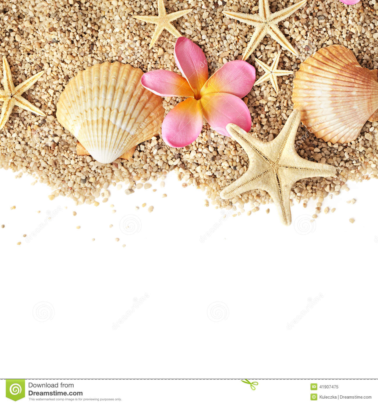 Seashells border stock image. Image of isolated, white ...