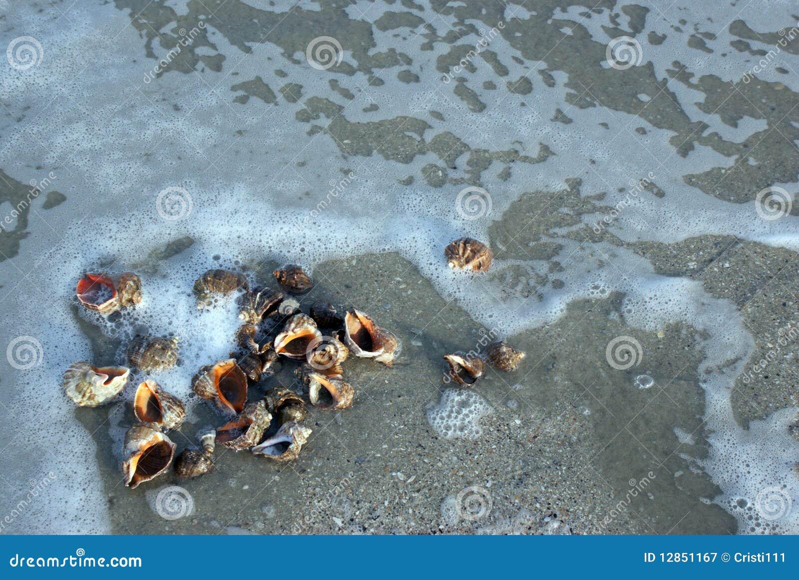 Seashells dans les ondes