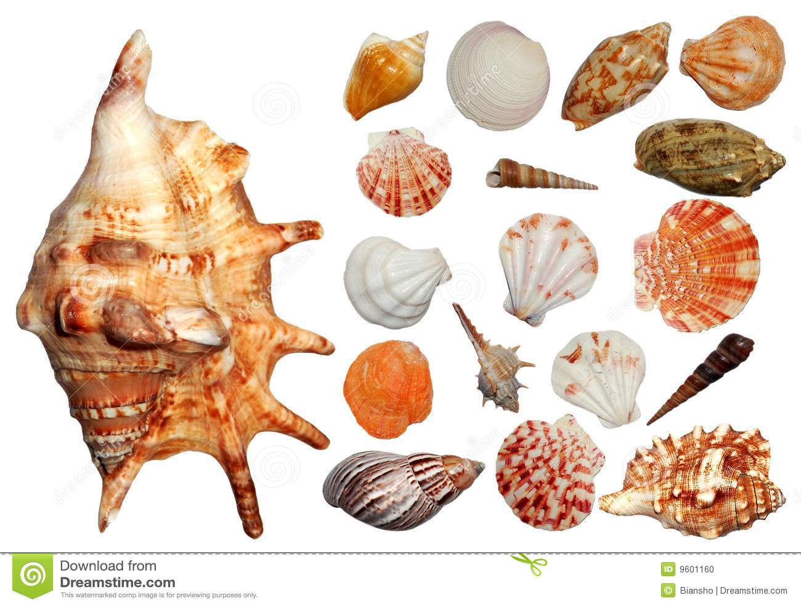 Seashells de ramassage