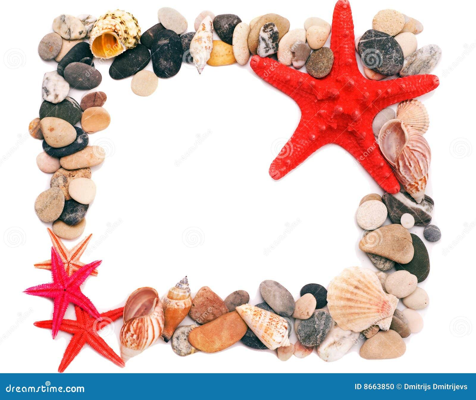 Seashells de sable d illustration de trame