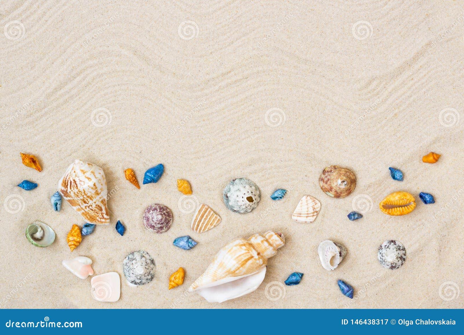 Seashells en la arena Fondo de las vacaciones de verano del mar con el espacio para el texto