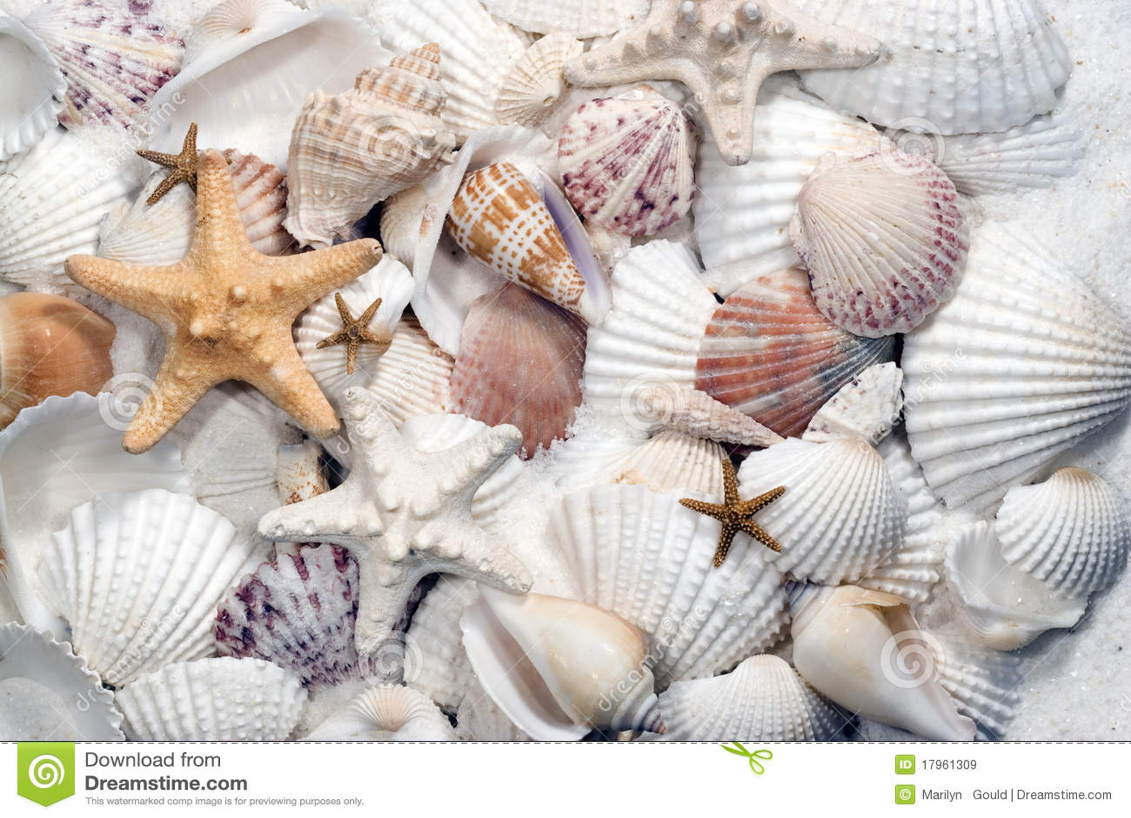 Seashells et étoiles de mer