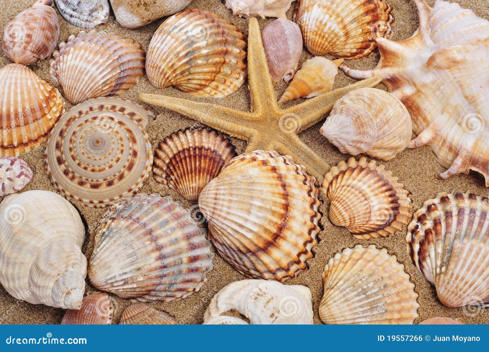 Seashells et seastar sur le sable