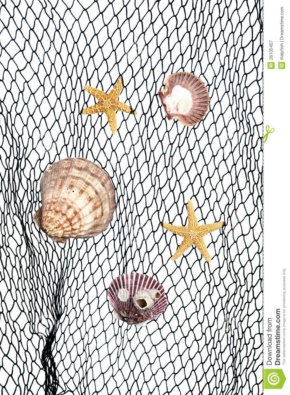 Seashells and starfish caught in a green fishing net for use as an ...