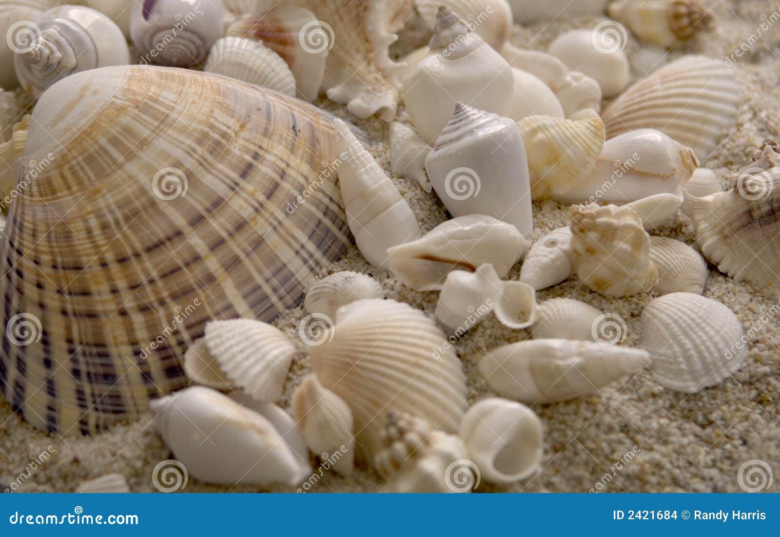 Seashells que sentam-se na areia