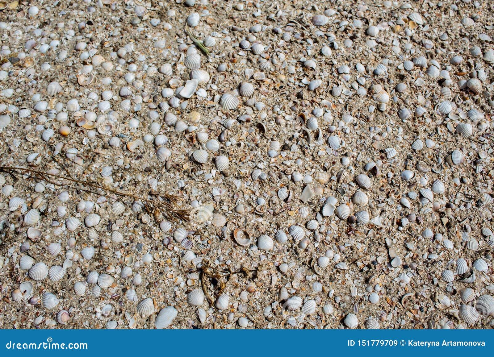 Seashells różni kolory i rozmiary, kłamstwo na piasku