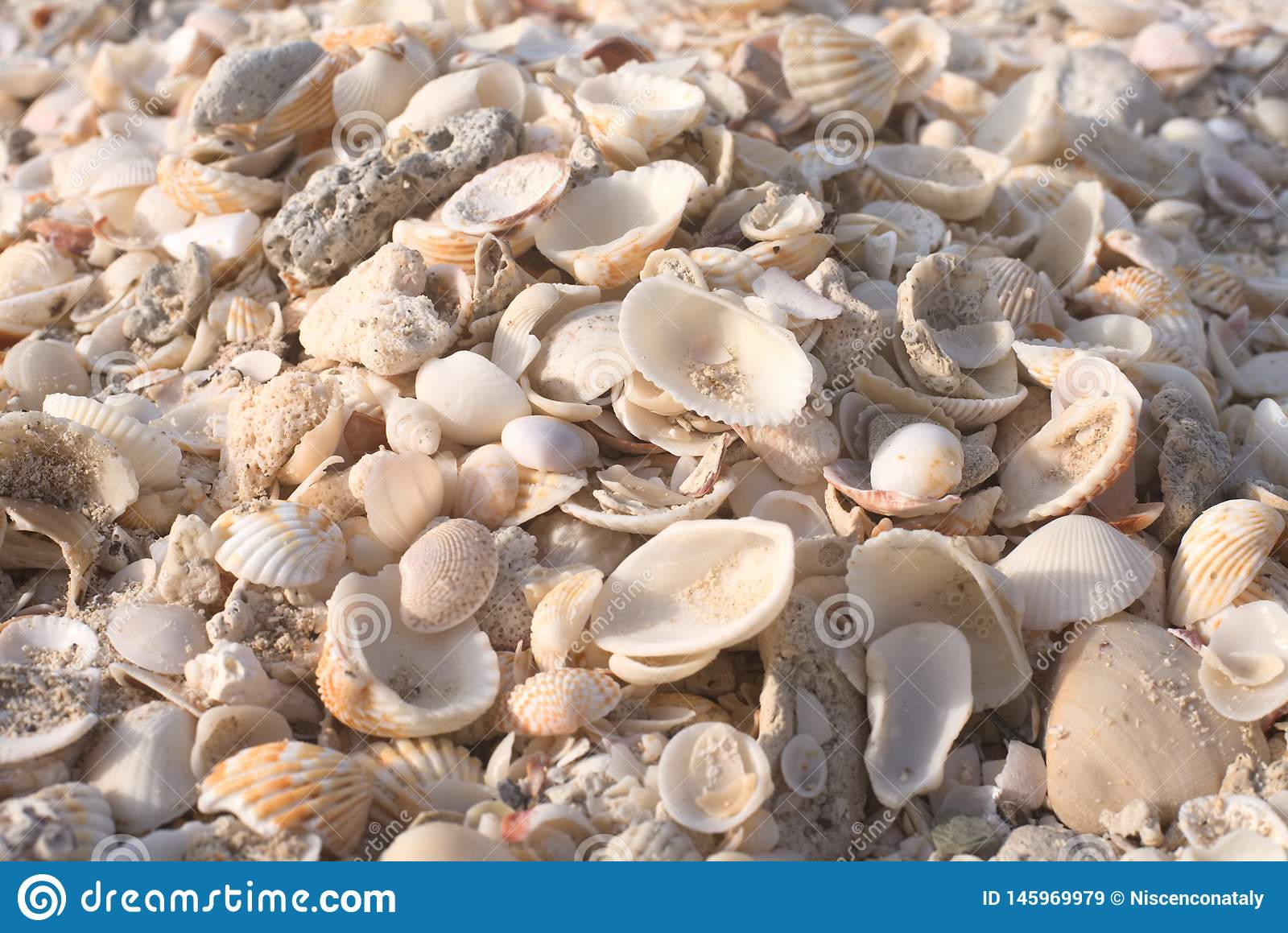 Seashells on a sandy ocean beach
