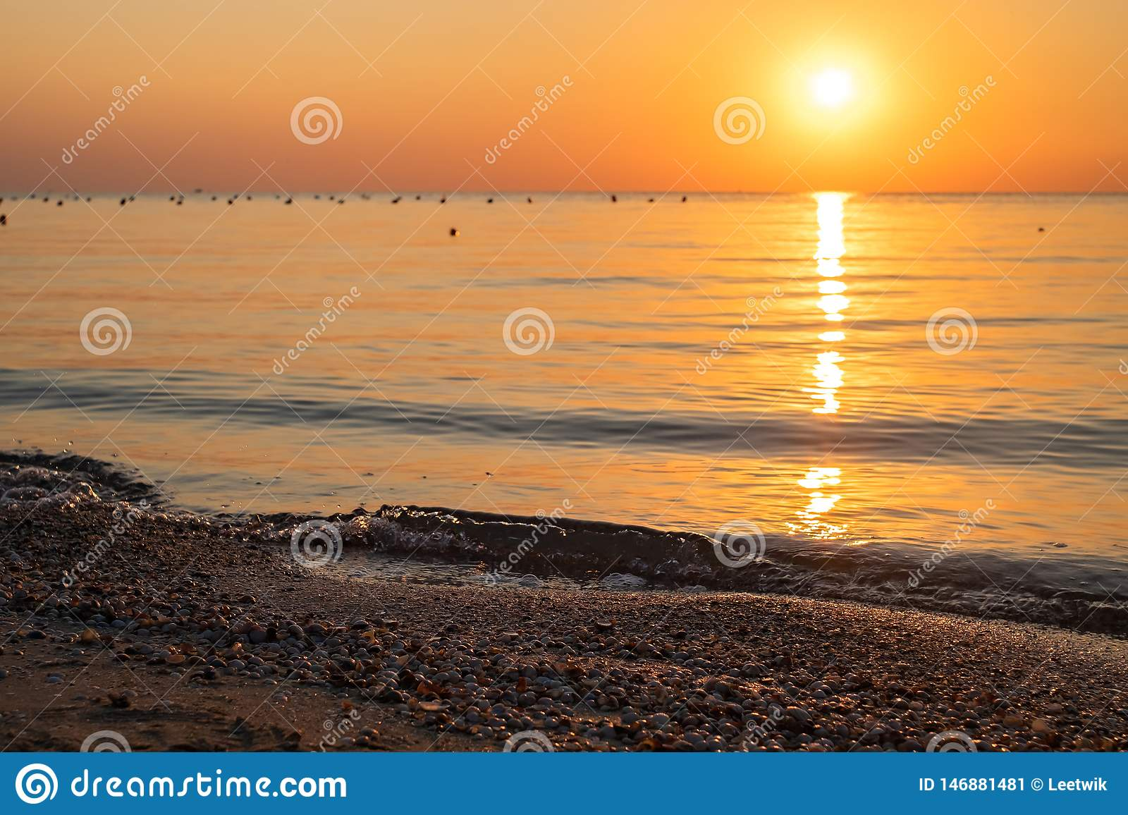 Seashells on the sea beach against the backdrop of a colorful dawn. focus control