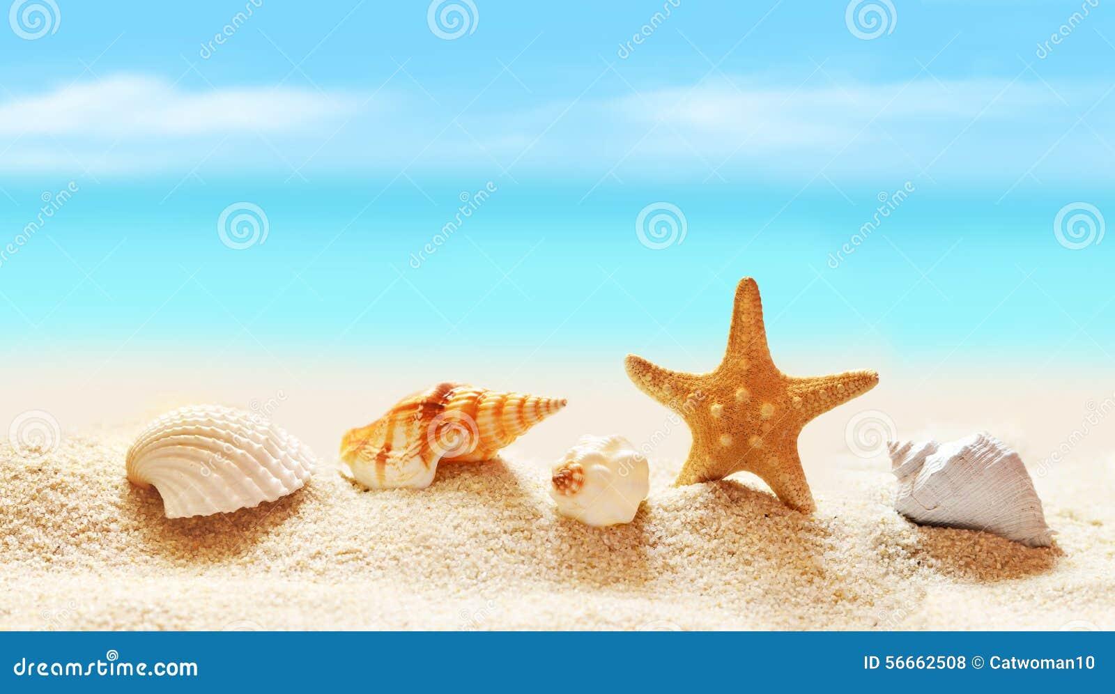 search tropical fish seashells