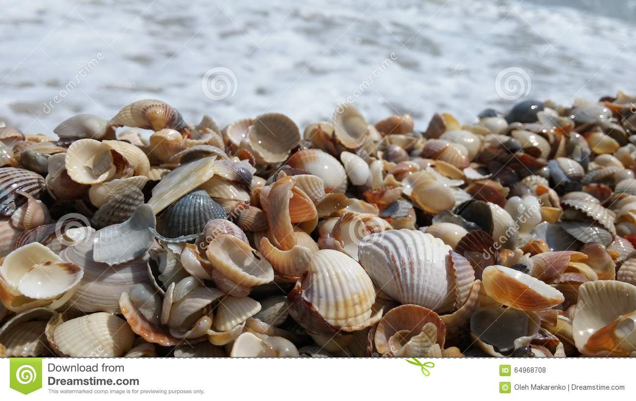 how to travel with seashells