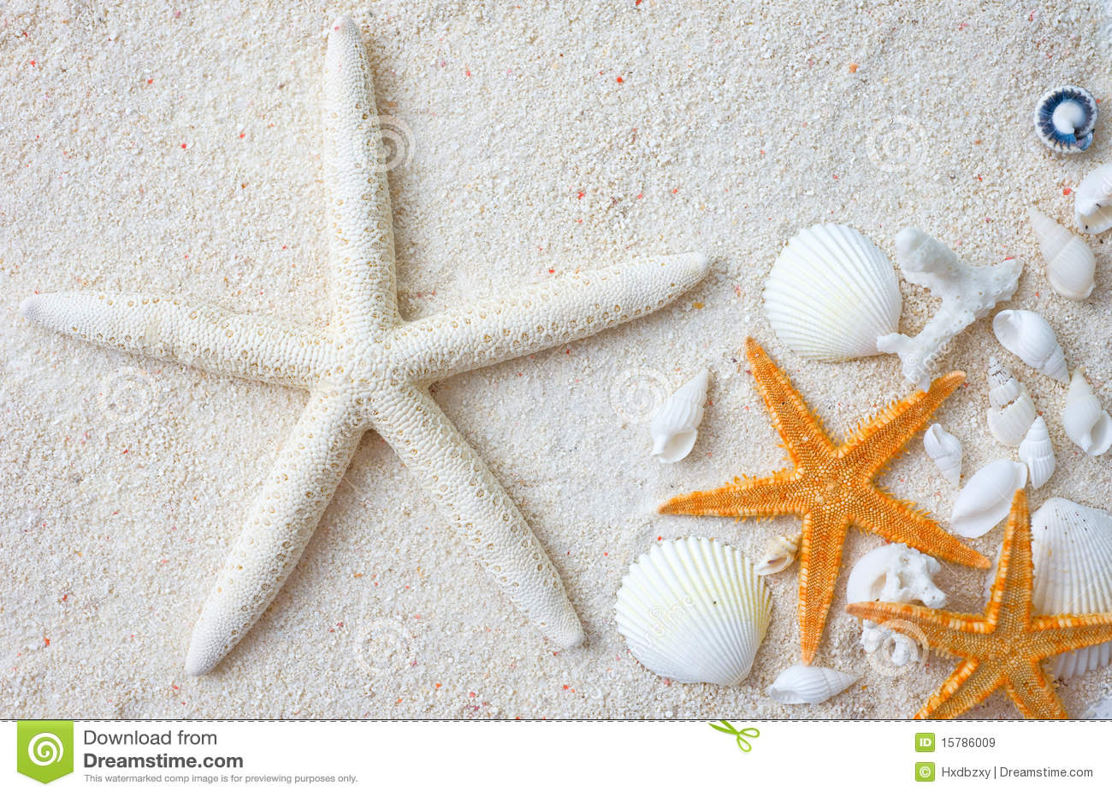 royalty free stock images seashells starfish image