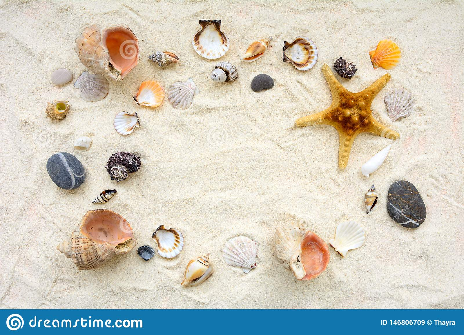 Seashells sulla sabbia Fondo di vacanze estive del mare Vista superiore Copi lo spazio
