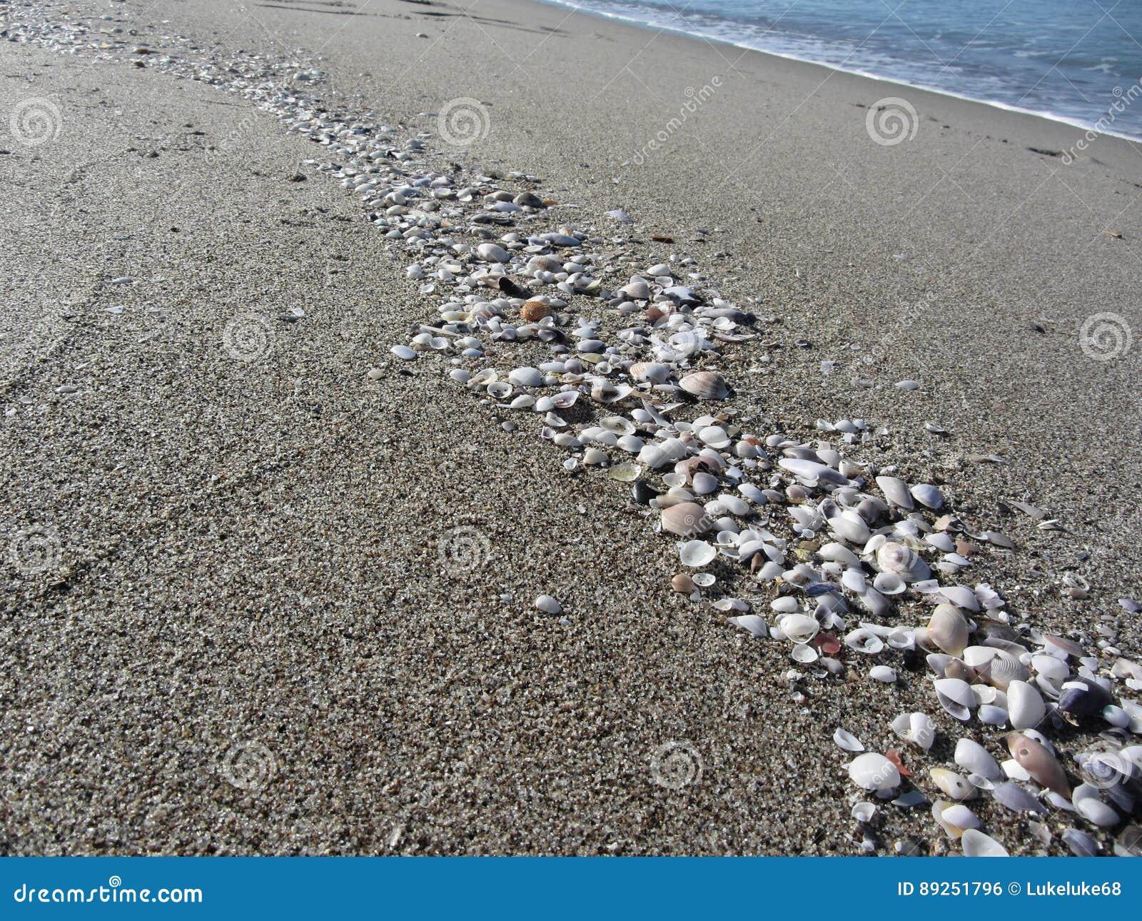 Seashells sulla sabbia Priorità bassa della spiaggia di estate Vista superiore