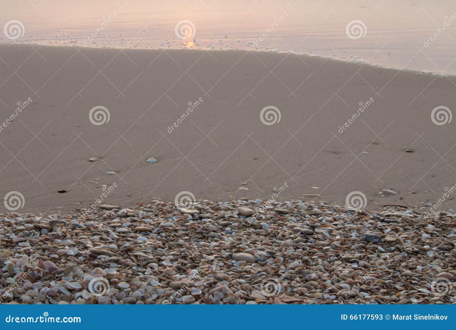 Seashells sulla spiaggia