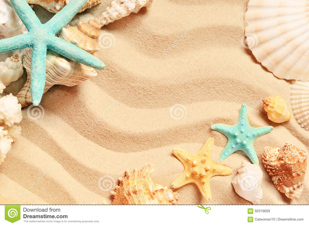 Seashells on a summer beach and sand as background. Sea shells.