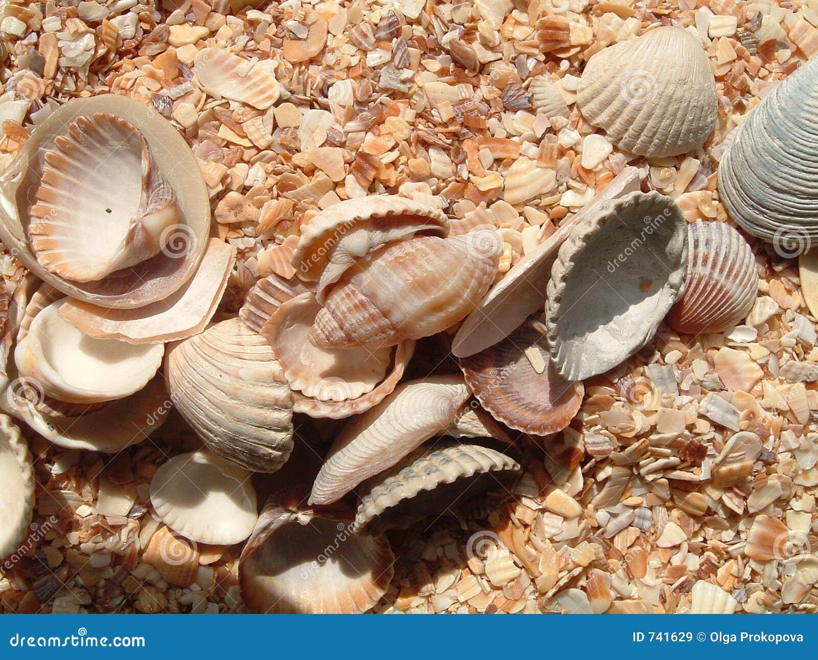 Seashells sur la chanson