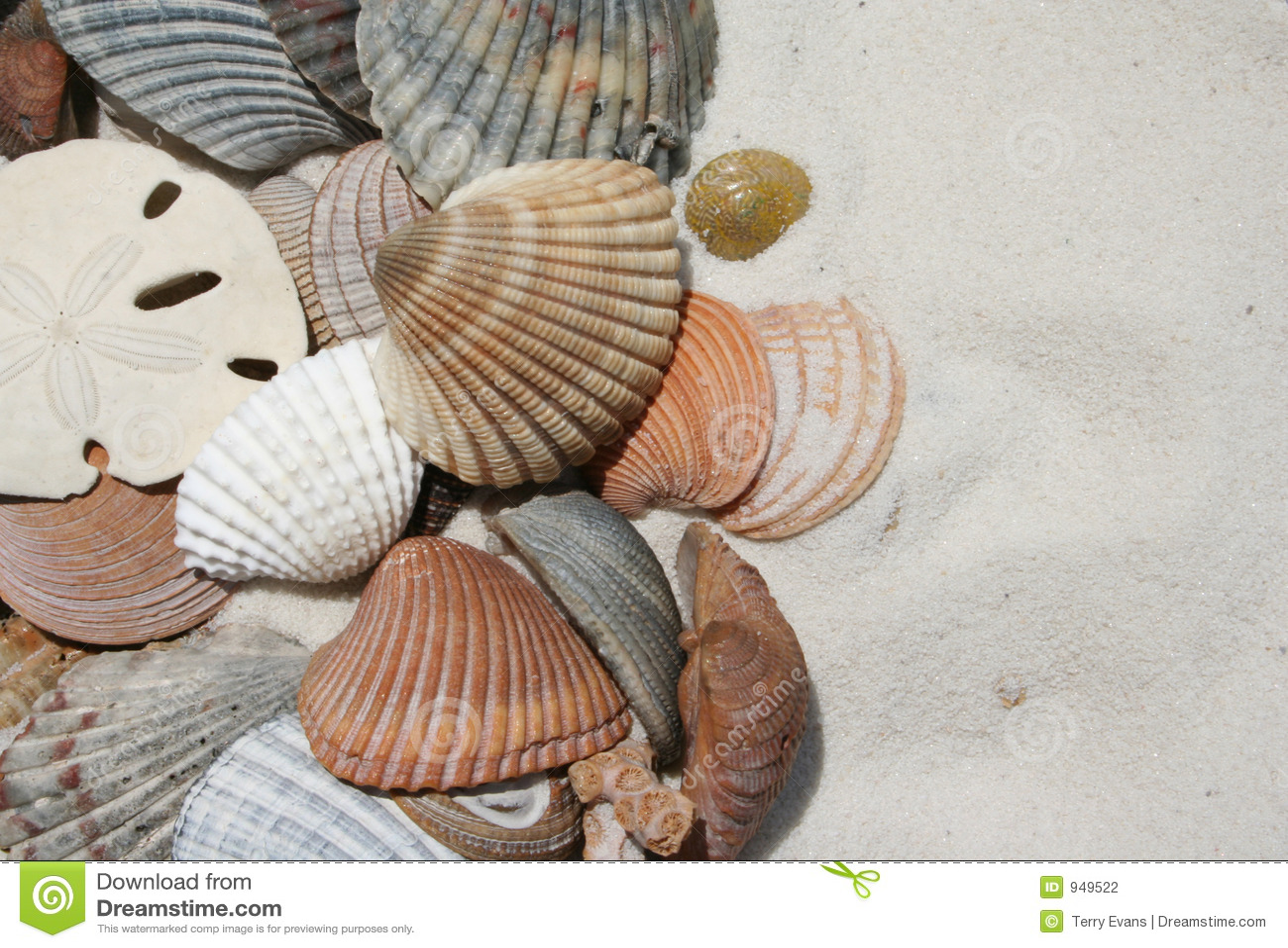 Seashells sur la plage