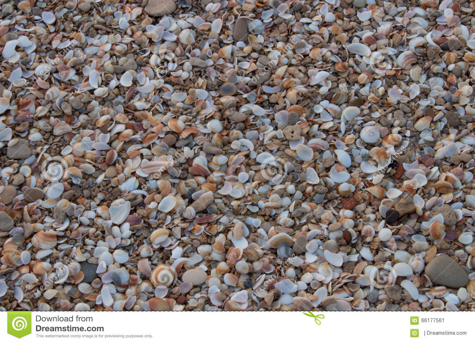 Seashells sur le bord de la mer
