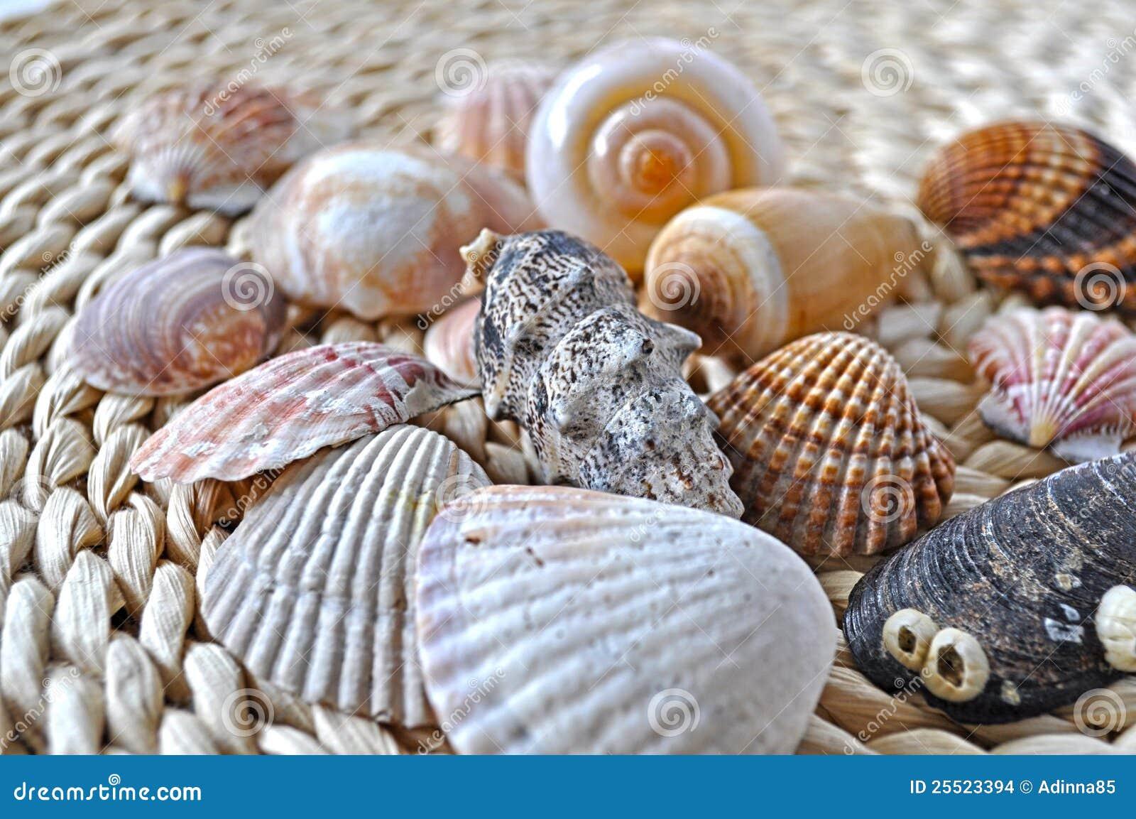 Seashells sur le rotin