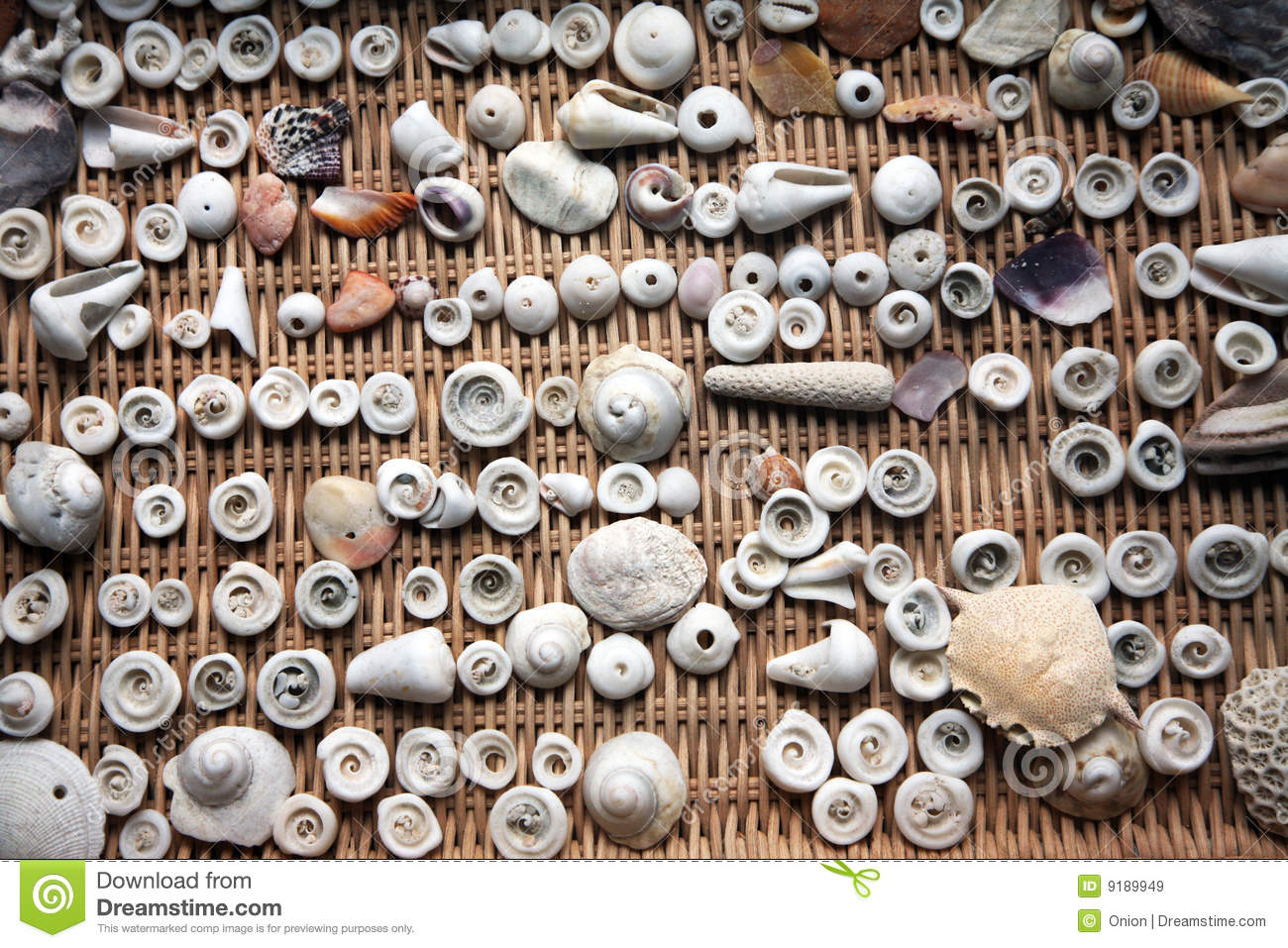 Seashells in vari formati