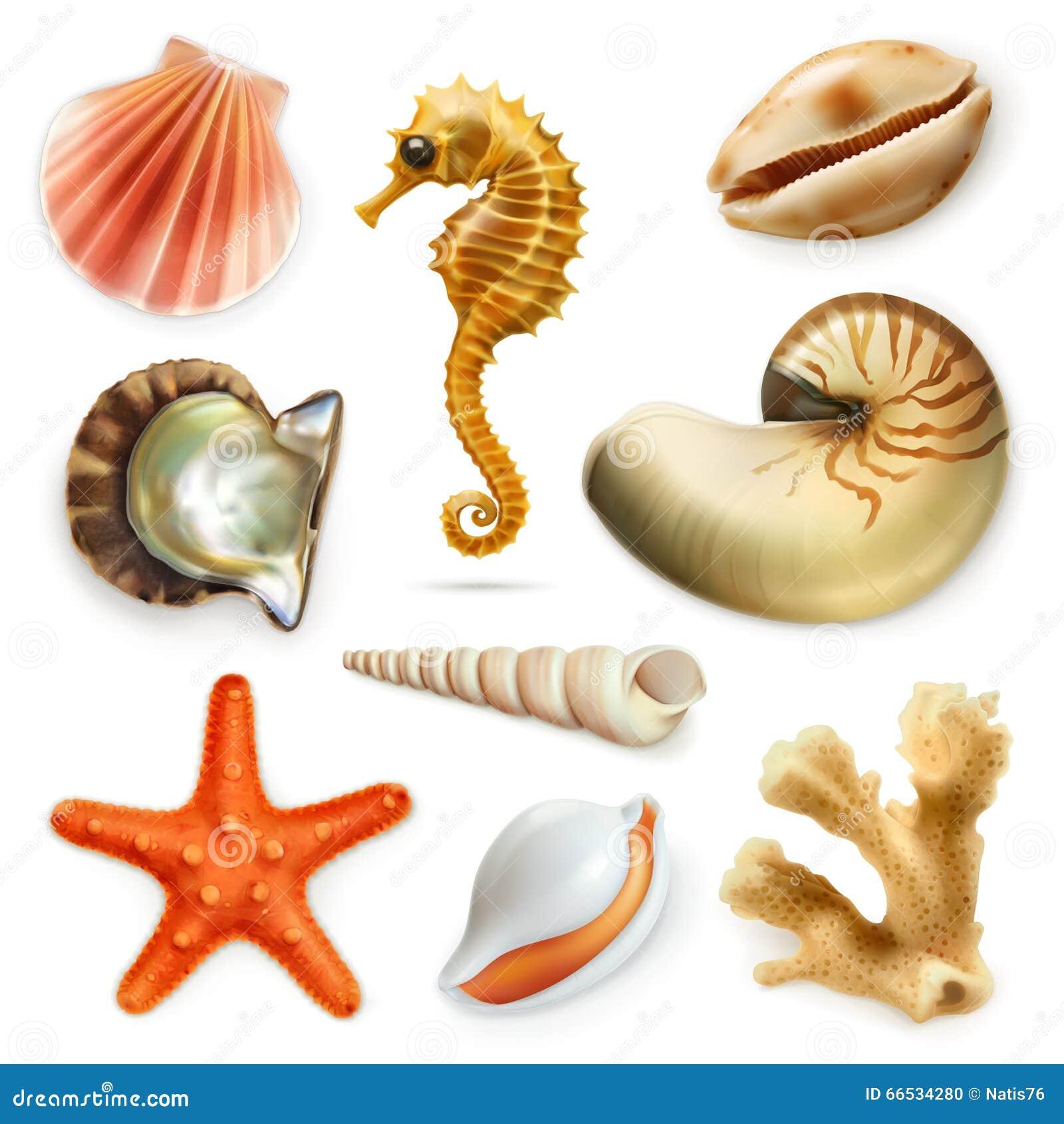 Seashells, wektorowy ikona set