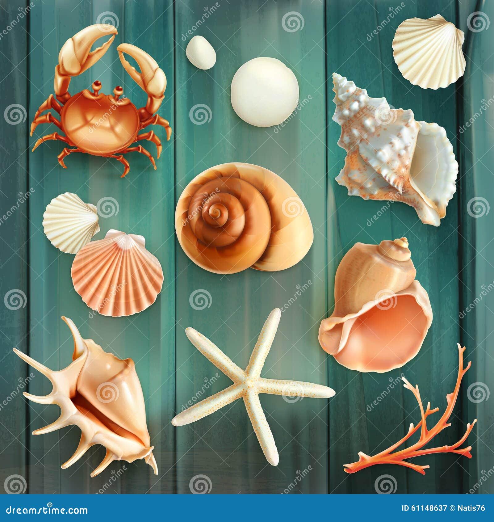Seashells wektoru ikony