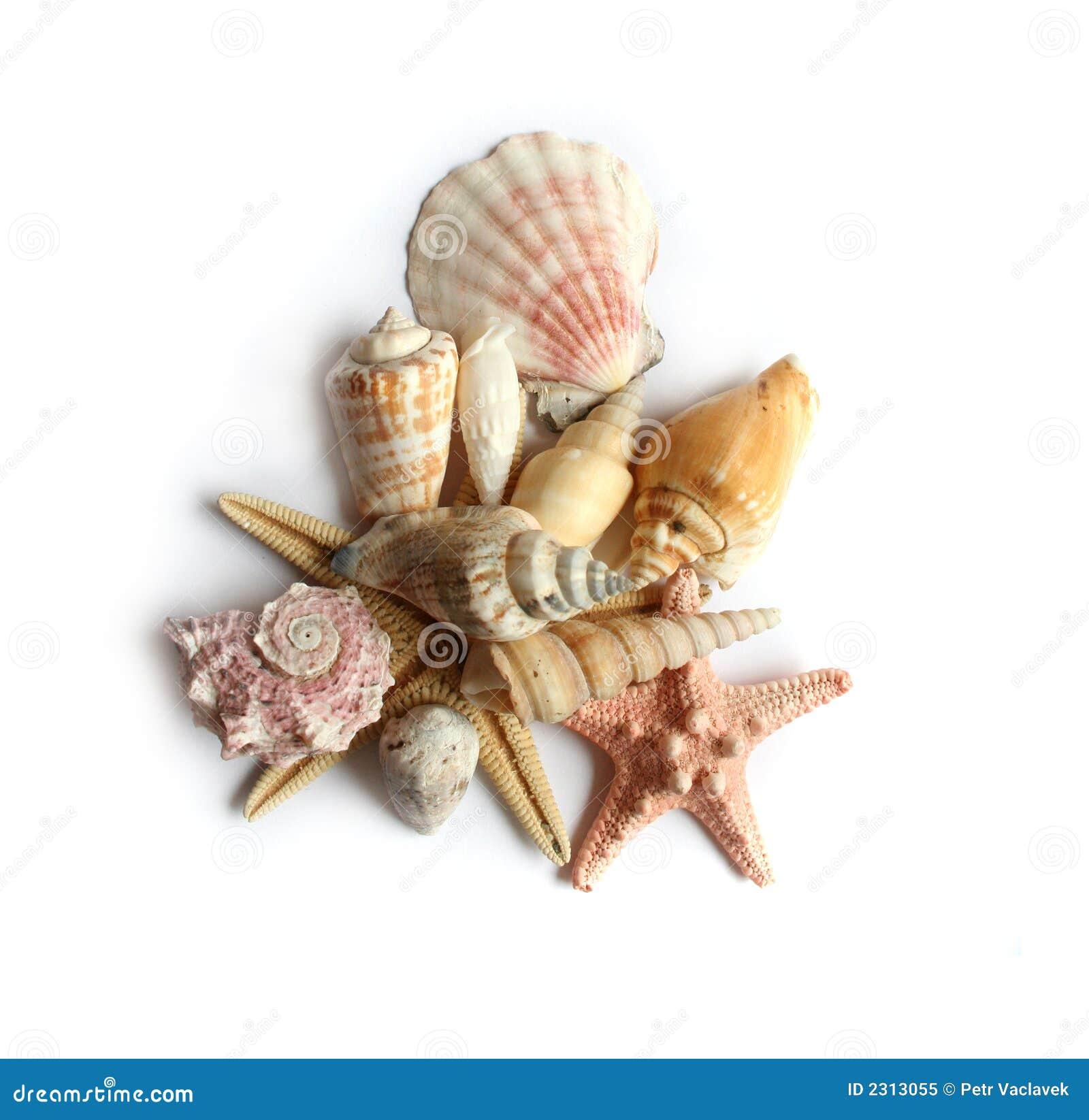 Seashells On White Background Royalty Free Stock Photo - Image ...