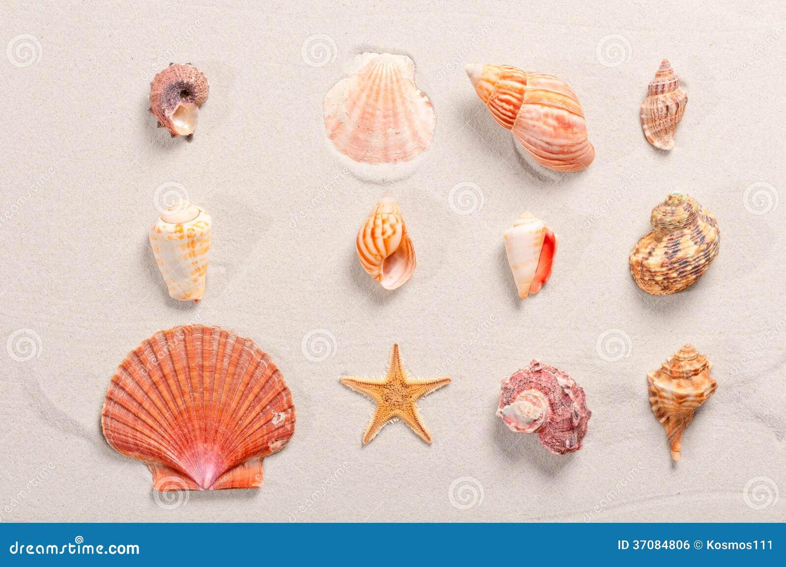 Download Seashells Wykładający W Rzędzie Zdjęcie Stock - Obraz złożonej z horyzontalny, niezrównoważenie: 37084806