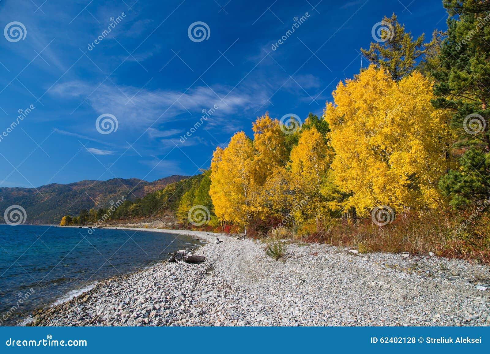 Seashore and autumn trees