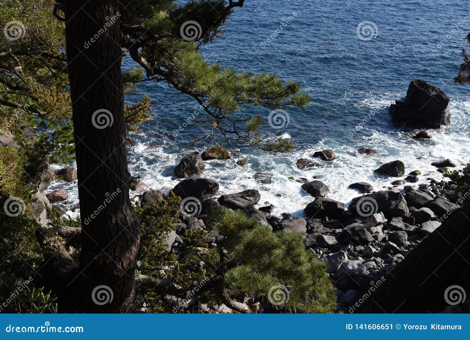 Seashore landscape White waves