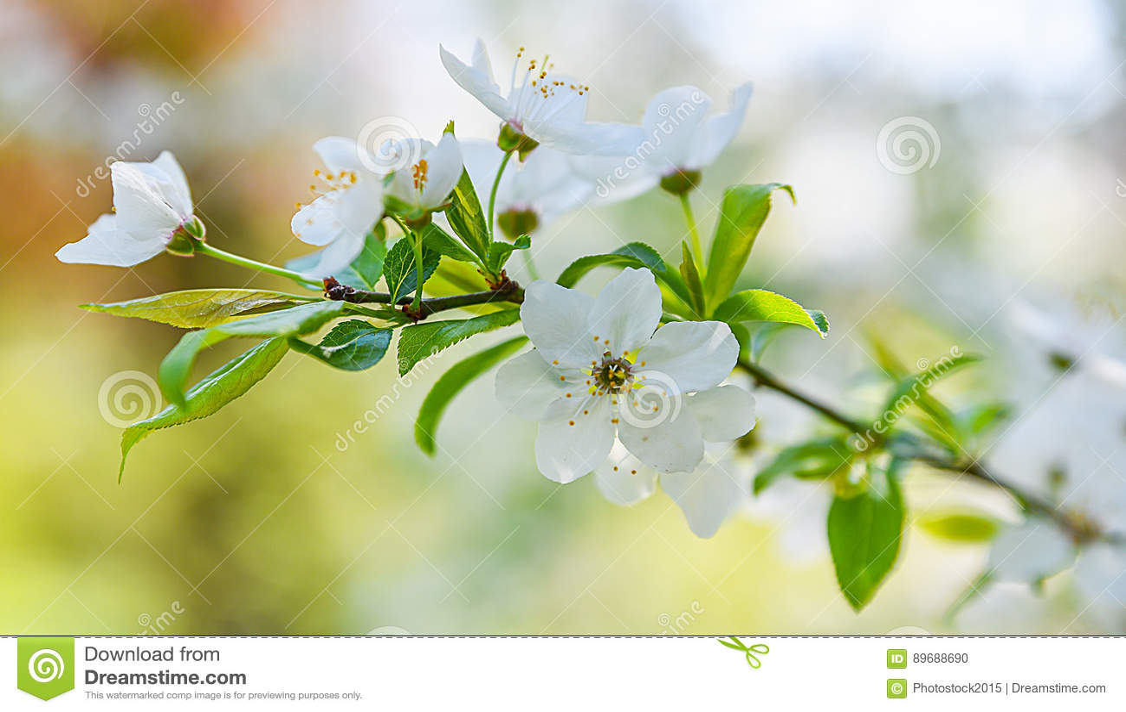 Seasonal Spring Flowers Trees Background Stock Photo Image Of Blue