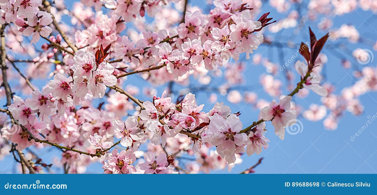 Seasonal spring flowers trees background