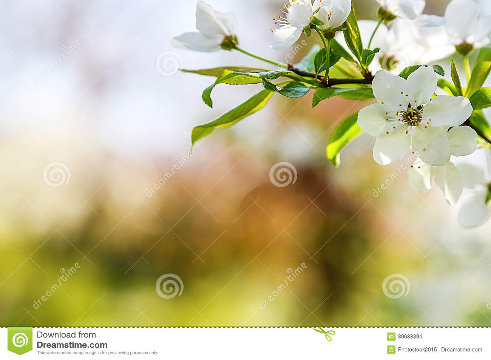 Seasonal Spring Flowers Trees Background Stock Photo Image Of