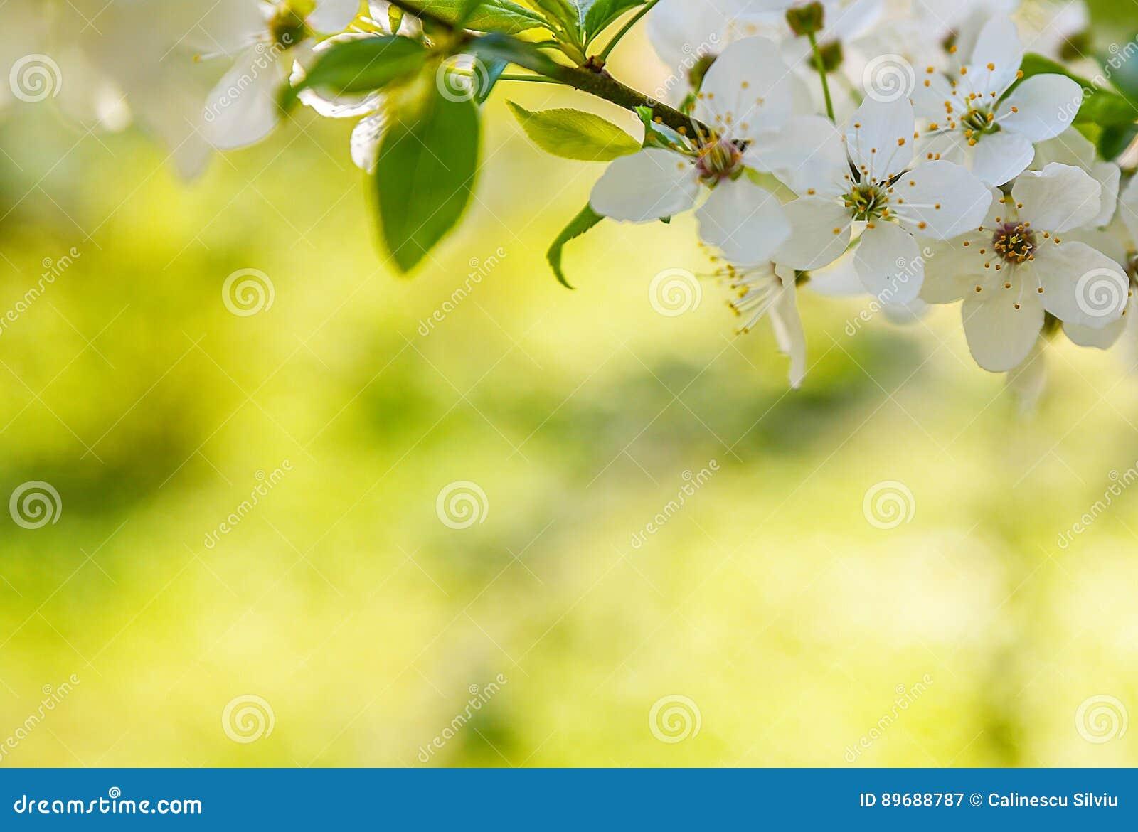 Seasonal Spring Flowers Trees Background Stock Image Image Of