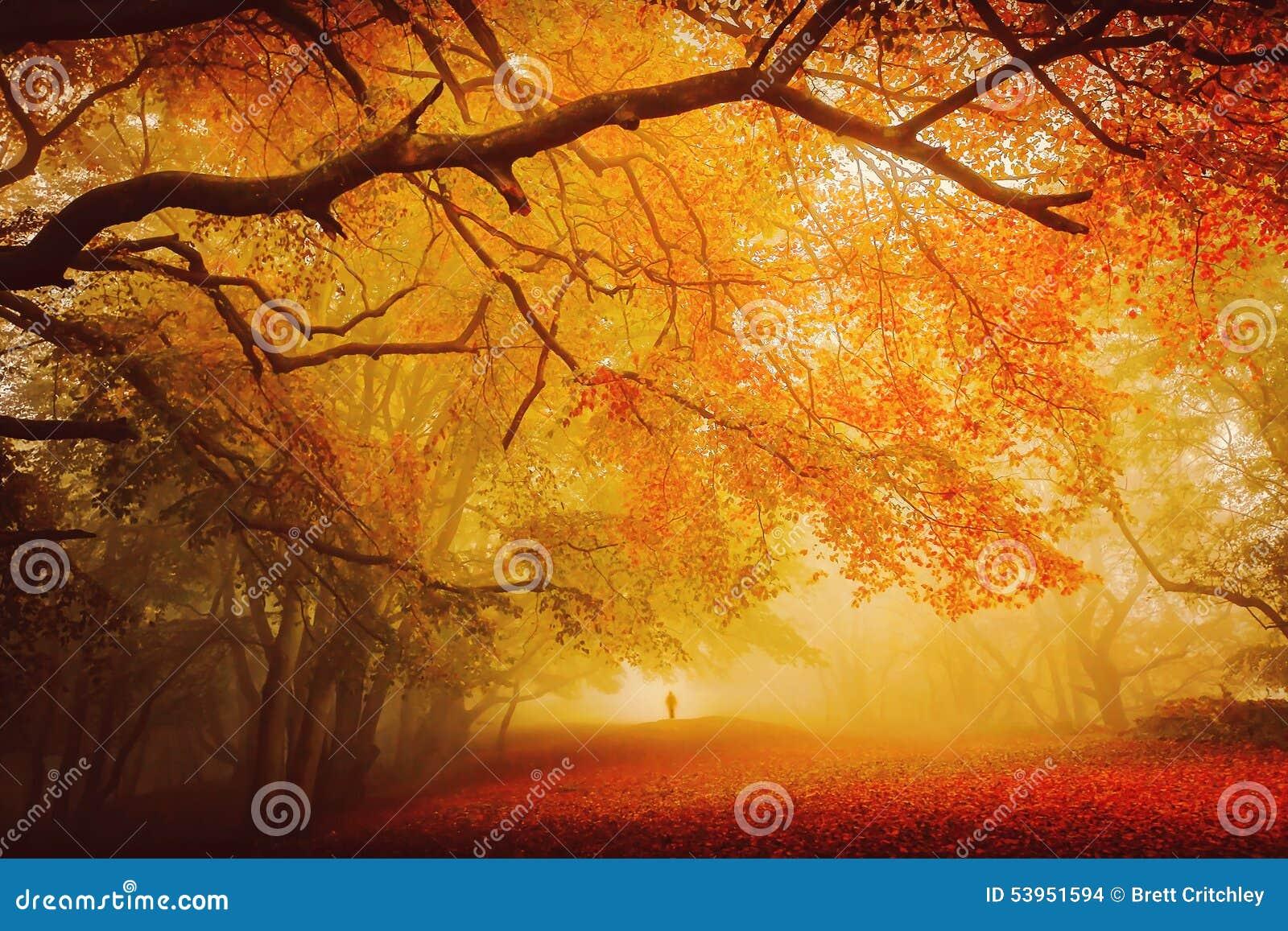 Seasonal forest fall walk