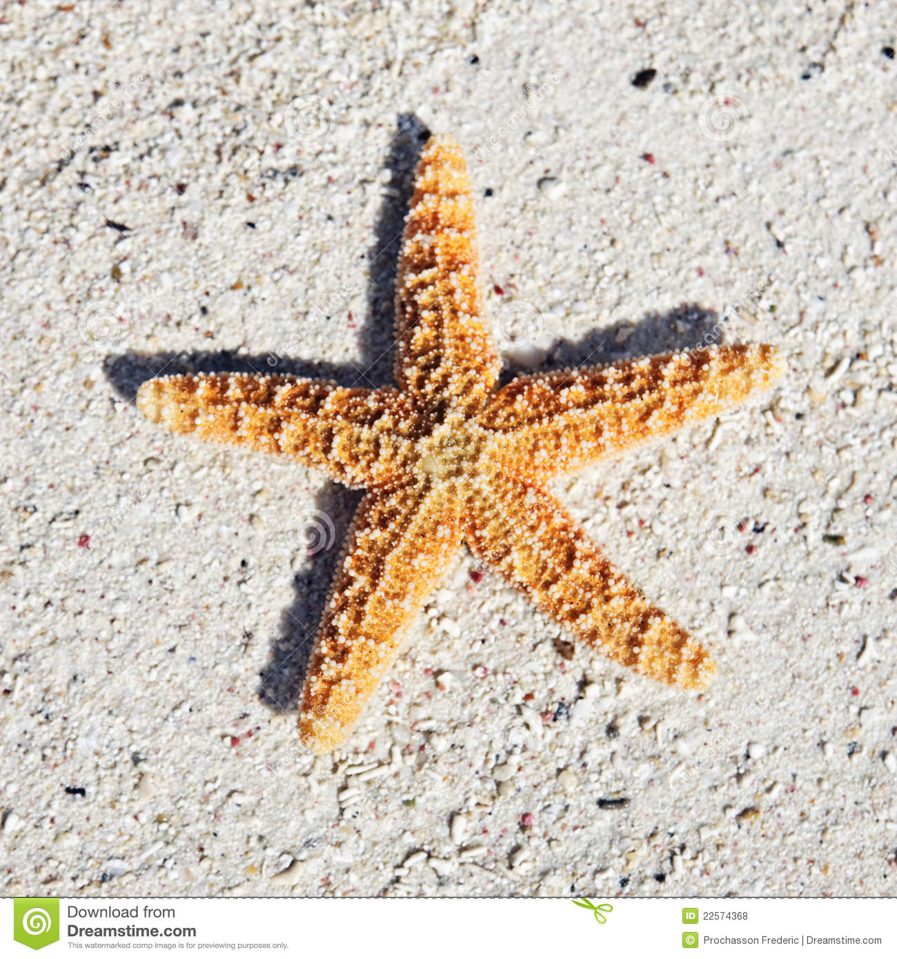 Seastar Royalty Free Stock Photos - Image: 22574368