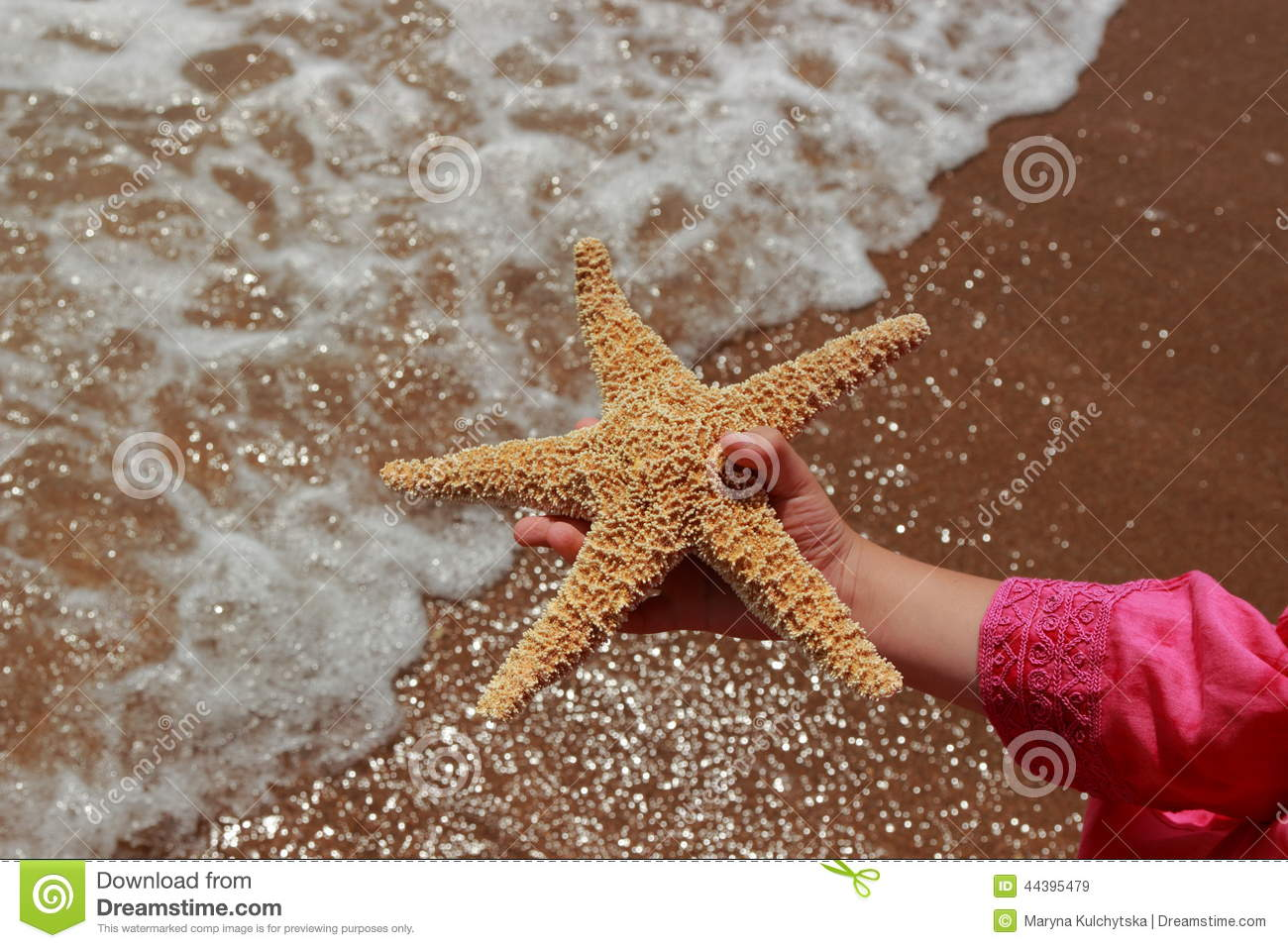 Seastar stock image  Image of girl, astrology, beach - 44395479